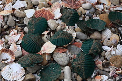 Photograph - Green Shells by Aidan Moran