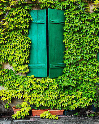 Green Shutters And Ivy In Riquewihr France Art Print