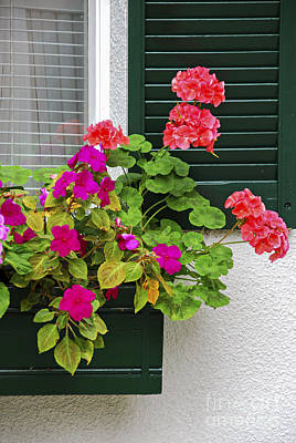 Begonias Photograph - Green Shutters by Elena Elisseeva