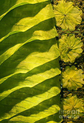 Photograph - Green Silk 02 by Rick Piper Photography