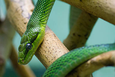 Photograph - Green Snake by Leah Palmer