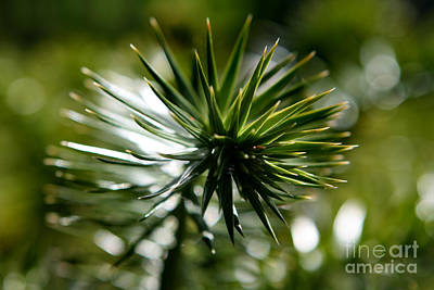 Photograph - Green Spike by Deena Otterstetter