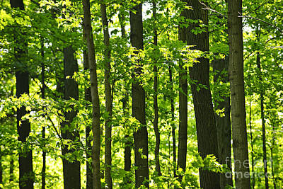 Landscapes Royalty-Free and Rights-Managed Images - Green spring forest 2 by Elena Elisseeva