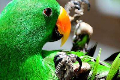 Yellow Beak Photograph - Green Star Peppi. Game Starting by Jenny Rainbow