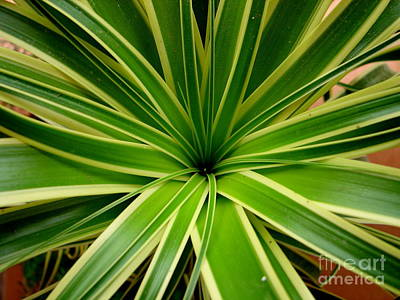 Photograph - Green Starburst by Lew Davis