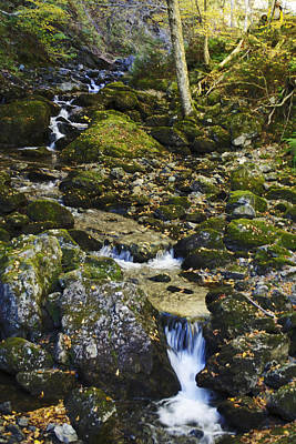 Green Stream  Art Print by Julie Smith
