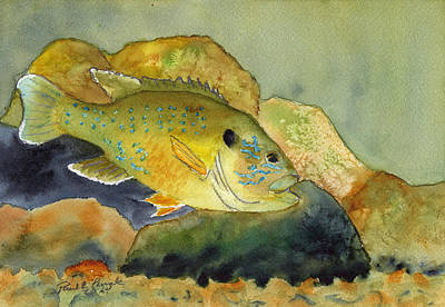 Green Sunfish Art Print by Paul Temple