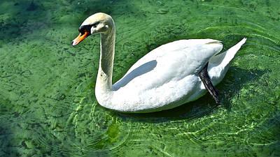 Green Swan Art Print