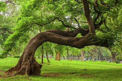 Bangalore Photograph - Green by This Is Captured By Sandeep Skphotographys@gmail.com