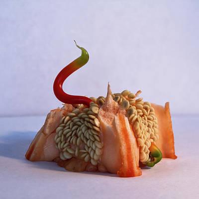 Photograph - Green Tipped Pepper Snake by Matt Molloy