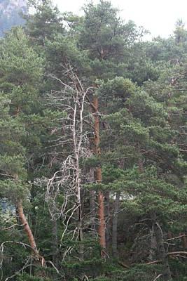 Photograph - Green Tree   Lac Des Eaux Chaudes by Phoenix De Vries