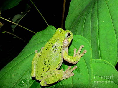 Lovely Lavender - Green Tree Frog by Joshua Bales
