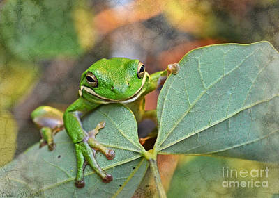 Photograph - Smilin' Tree Frog  by Debbie Portwood