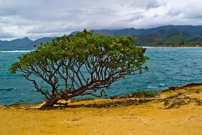 Photograph - Green Tree by Matt Radcliffe