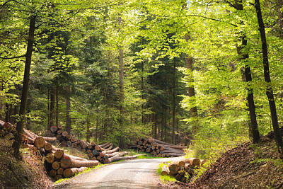 Fresh Green Photograph - Green Trees In The Forest In Spring by Matthias Hauser