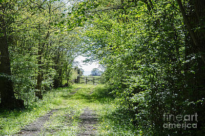 Photograph - Green Tunnel Of Fresh Leaves With An Old Gate Ahead by Kennerth and Birgitta Kullman