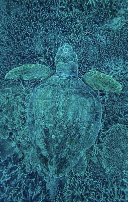 Photograph - Green Turtle Hidden In Coral by Greg Sullavan