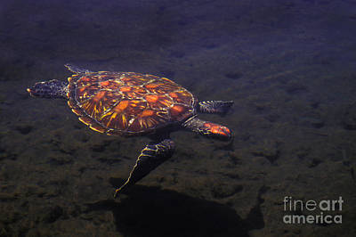 Green Turtle Orange Morph Art Print by Ron Sanford