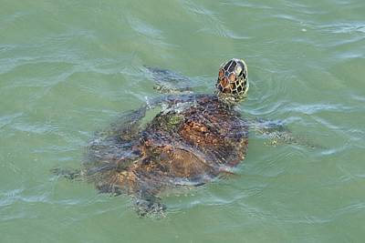 Photograph - Green Turtle Surfacing by Bradford Martin