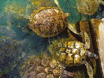 Reptiles Photos - Green Turtles by Carey Chen