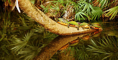 Overhang Photograph - Green Turtles Chelonia Mydas On A Tree by Panoramic Images