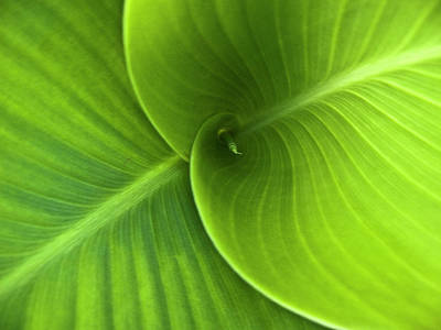 Green Twin Leaves Print by Heiko Koehrer-Wagner