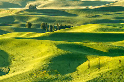 Wheat Field Photograph - Green Velvet by Patricia Davidson