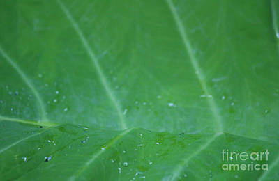 Photograph - Green Wave Close-up by Jackie Farnsworth