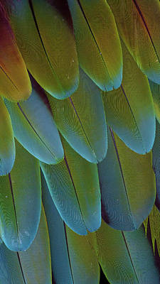 Macaw Photograph - Green-winged Macaw Wing Feathers by Darrell Gulin