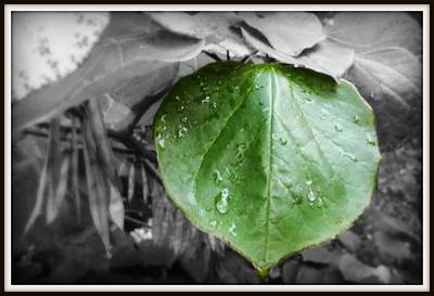 Photograph - Green With Envy by Sherry Lasken