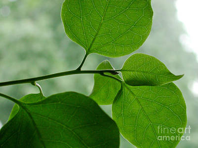Photograph - Green Zen by Kathi Shotwell