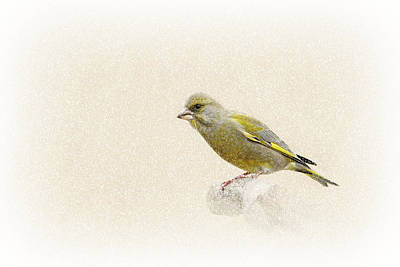 Finch Mixed Media - Greenfinch by Heike Hultsch
