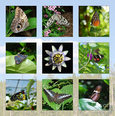 Photograph - Greenhouse Butterflies Collage by Debra Thompson