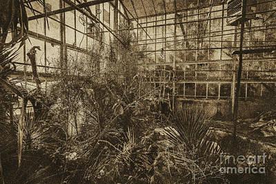 Photograph - Greenhouse Three by Ken Frischkorn