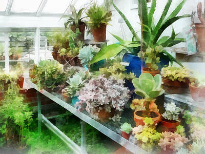 Photograph - Greenhouse With Cactus by Susan Savad