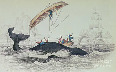 Sailboat Ocean Drawing - Greenland Whale Book Illustration Engraved By William Home Lizars  by James Stewart