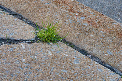 Photograph - Greens In The Crack by Beth Sawickie