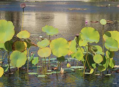 Greens On A Pond 3 Art Print by Mark Steven Burhart