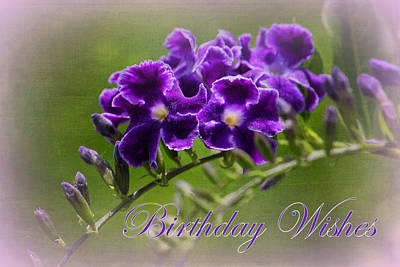 Photograph - Greeting Cards - Birthday Wishes by HH Photography of Florida