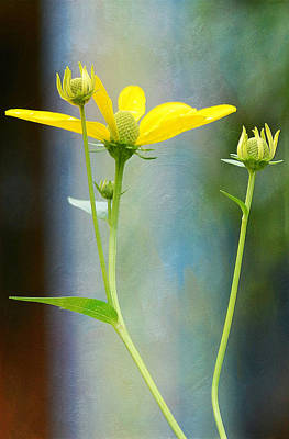 Photograph - Greeting The Day by Fraida Gutovich