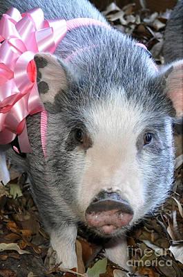 Photograph - Gretel Piggy by Cheryl McClure