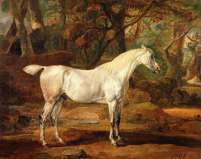 Grey Arabian Stallion, The Property Of Sir Watkin Art Print