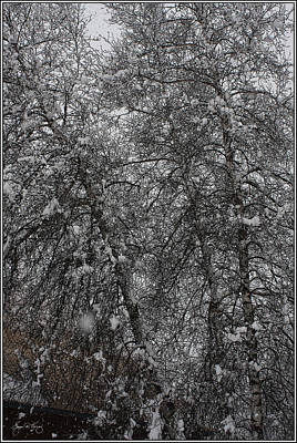 Photograph - Grey Birch Details In Snowstorm by Wayne King