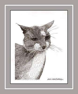 Grey Cat Number 12 Art Print by Jack Pumphrey