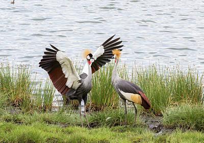 Animal Behavior Photograph - Grey-crowned Cranes (balearica Regulorum by James Heupel