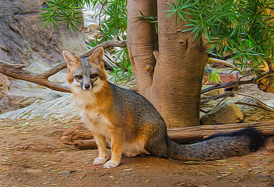 Photograph - Grey Fox by Barbara Manis
