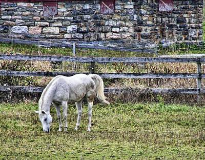 Photograph - Grey Horse by JAMART Photography