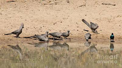 Traditional Bells - Grey Lourie - Reflection of a Flock by Hermanus A Alberts