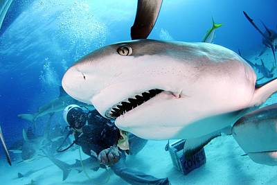 Grey Reef Shark Art Print by Liudmila Di