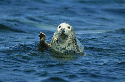 Grey Seal Waving Art Print by Martin Woike